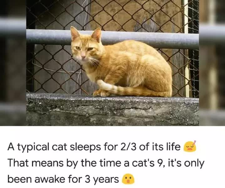A typical cat sleeps for 2/3 of its life That means by the time a cat's 9, it's only been awake for 3 years
